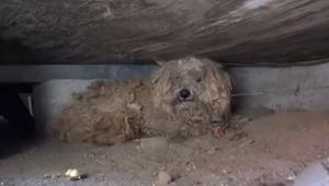Hunden ventede ET HELT ÅR på at dens ejer skulle komme tilbage. Det der skete ba
