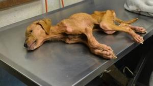 Denne hund blev reddet af en vis familie, de forventede dog ikke at den ville vi