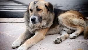 Hver dag gik denne hund hen til kirken. Når du ser årsagen vil du knibe en tåre.