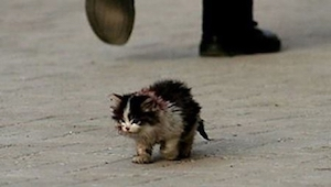 Alle var bange for at røre ved den kat, så tog han den i hånden, og der skete no