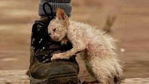 Hun fandt en kat, som var i en ynkværdig tilstand; da hun hjalp den, skete der n