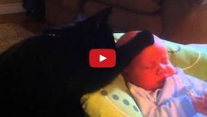 Da barnet græd i et væk, fordi det ikke kunne sove, gjorde denne kat noget impo