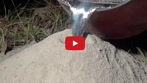 Han hældte smeltet metal ned i en myretue; effekten vil gøre indtryk på dig!