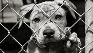 Kvinden troede hun reddede en hund, men måden hunden ser på historien er guld væ