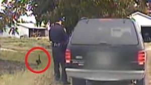 Denne kat gjorde noget virkelig genialt med politibetjenten. Jeg var ved at dø a