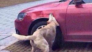 Bilisten var helt bevidst, om det han foretog sig, da han kørte hunden over. Se