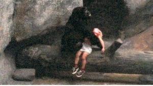 En treårig dreng faldt ind i en dyreindhegning, så nærmede en kvindelig gorilla