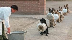 Vil I tro, at disse hunde er i stand til at vente i en kø, roligere end de flest