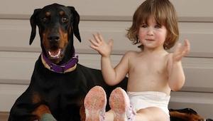 Familien tog en dobermann til sig; det som hunden gjorde 4 dage senere ændrede d