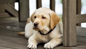 En landmand forsøgte at overbevise en dreng til ikke at købe en invalid hund. Sv