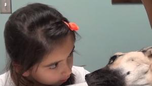 Pigen kiggede ind i øjnene på en døende hund; det, der skete bagefter, er miraku