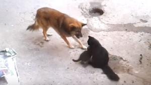 En hund kommer hen til en kattemor, som sidder med sine killinger, og så sker de