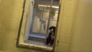Hundens reaktion, efter at den netop gør sig klart, at den er blevet adopteret..