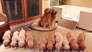 Se billedgalleriet med de 15 sødeste billeder af hunde og deres unger. Specielt