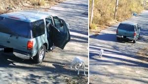 Han smed hunden ud af bilen og kørte videre... Det, som skete bagefter, er et vi