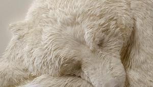 Det ligner en sovende isbjørn, men jeg blev lamslået, da jeg fandt ud af, hvad d