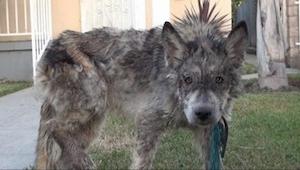 Dyrlægen redede en hund som var ved at dø af sult. Der er bare det ved det... at