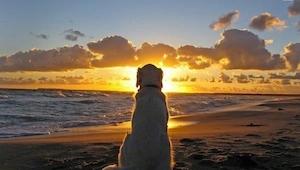 Hunde dør aldrig. De sover i dit hjerte. Alle der elsker dyr, bør læse dette!