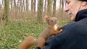 Egernet kom op på mandens overarm, men læg mærke til dets poter..