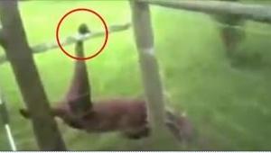Politibetjenten gjorde hunden fri, efter at dens pote havde sat sig fast i hegne