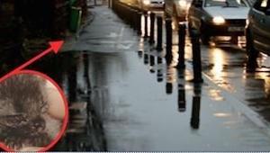 Kvinden troede det var en våd rotte, men se hvordan den ser ud 4 måneder senere.