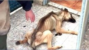 Det som de gjorde ved den hund, burde straffes! Heldigvis lykkedes det at redde