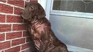 Hunden sad hver dag ved den tomme forbygning, men da de fremmede nærmede sig, bl