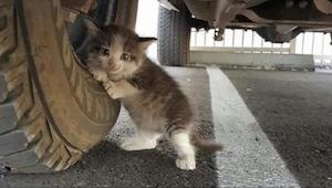 Manden fandt denne kat under sin bil. Da hans kone skrev denne SMS, blev alt plu