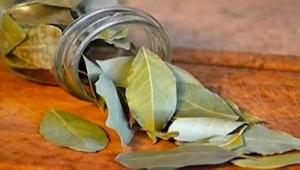 Prøv at brænde nogle laurbærblade derhjemme; efter blot 10 minutter ser du resul
