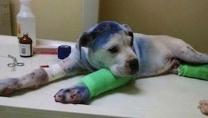 To hunde blev mishandlet af deres ejere. Det der sker da de møder hinanden på hu