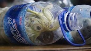 Toldbetjentene kunne ikke tro hvad de så inden i flaskerne. Chokerende!