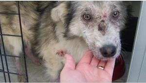 De smed sten på hunden... For at beskytte den måtte denne teenager overvinde sin