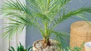 Disse egenskaber hos planter vil overraske jer! Læs ubetinget, hvis jeres helbre