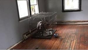 Hundene, som var efterladt til den visse død i et tomt hus, foretog sig noget he