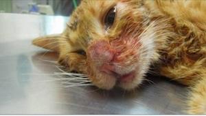 Katten fik tæv af sin ejer. Og det af en fuldstændig absurd årsag!