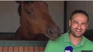 Reporteren stod foran kameraet og skulle fortælle om heste, da den, det drejede