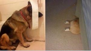 19 hunde leger skjul. Den fra billede nr. 10 tog hele puljen!