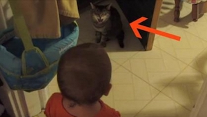 Mor optog sin baby snakke med katten. Kattens reaktion efter 10 sekunder? Uvurde