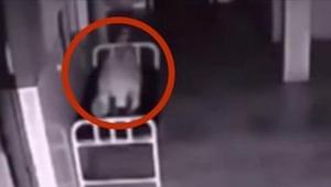 Denne døde kvinde ligger på en hospitalsgang. Det som overvågningskameraet har o