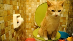 Det denne kat gør om lidt vil få dig til at grine!