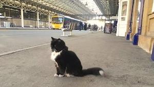 Katten havde ikke noget hjem i over 9 måneder. Nu tilbringer den hele dagen på p