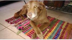 Da hun tog hunden til sig fra dyreinternatet, havde hun ikke mistanke om noget.