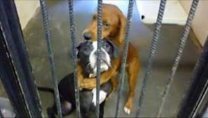 Billeder af hunde, som var ved at blive forberedt til aflivning, fik Internettet