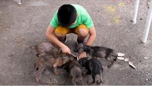 Denne dreng fandt noget bag ved kirken, som mindede om seks vældige rotter. Et å