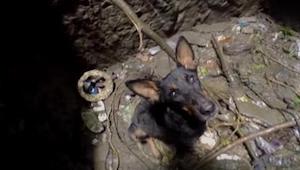 Da redningsmanden kommer ned til bunden af brønden for at redde hunden, er dens