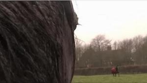 De 3 heste blev opfostret sammen, men senere blev det nødvendigt at sælge en af