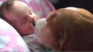 Deres datter var døende. Hvad deres hund gjorde, overraskede hele familien.