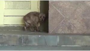 Den rædselsslagne tævehund ryster af skræk ved dørtrinnet. 30 minutter senere ha