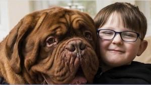 Hunden gik altid på drengens højre side. Da forældrene fandt ud af, hvorfor den