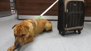 Hund efterladt på perronen, og sammen med den en kuffert; du vil ikke tro dine e